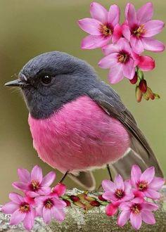 Most Beautiful Birds, Animals Beautiful, Beautiful Wife, Pretty Birds, Exotic Birds, Colorful Birds, Small Birds, Fake Birds, Yellow Birds