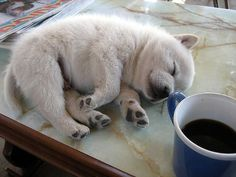 Daily Awww: Cute animals FTW! (35 photos) – theBERRY