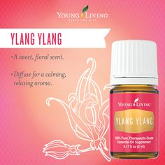 Add a few drops of Ylang Ylang with a handful of Epsom salt to a bath, sit back, and enjoy a little in-home spa time before the holiday frenzy sets in. https://www.youngliving.com/en_US/products/essential-oils/singles/ylang-ylang-essential-oil?sponsorid=1625338&enrollerid=1625338  #YoungLiving #YlangYlang