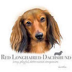 $11.04 - Red Longhaired #dachshund Robinson Pick Size T Shirt Youth Small-6 X Large #ebay #Fashion