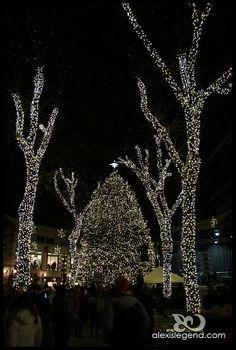 Boston Christmas Tree Lighting