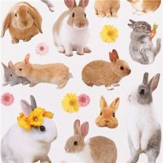 kawaii bunny stickers with flowers from Japan