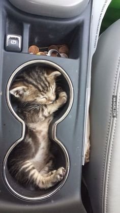 That's her favourite spot in the car.