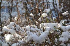130209_Schnee