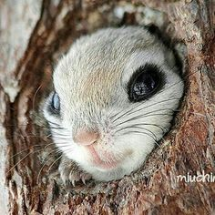 Follow @BabyAnmals for more Cuties baby animal photos @BabyAnmals @BabyAnmals @BabyAnmals  Hello how's it going? | Photography by @miuchin0412 by wildlifeaddicts