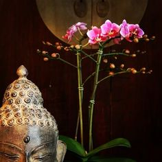 #buddha #orchid #zen - apartmentf15 photo