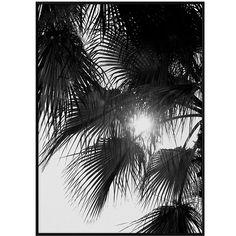 Paper Collectiven Palm Trees -valokuvajulisteessa auringonvalo siivilöityy palmunlehtien välistä korostaen niiden kaunista viuhkamaista siluettia. Mustavalkoinen kuva on otettu Israelissa, ja sen takana on Norm Architects.
