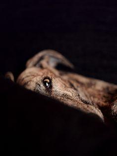 <3 Mascotas - a set on Flickr