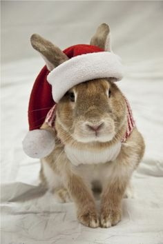 Christmas Bunny Rabbit Picture Contest 2011