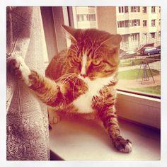 Маркусятина! :) #cat #cats #markus #кот #кошки #маркус