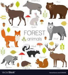 Find Forest Animals Isolated Vector Set Moose stock images in HD and millions of other royalty-free stock photos, illustrations and vectors in the Shutterstock collection. Thousands of new, high-quality pictures added every day. Circus Photography, Animal Photography, Forest Animals, Woodland Animals, Cabin Nursery, Moose Nursery, Hedgehog Illustration, Sea Illustration, Fox Squirrel
