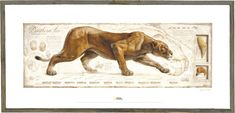 Lion poster for National Geographic by Fernando Baptista Big Cats Art, Cat Art, Art And Illustration, Cat Anatomy, Animal Anatomy, National Geographic Images, Lion Poster, Cat Posters, Historical Architecture