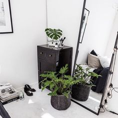A great selection of house plants available in store. @indiehomecollective We're open 10am - 4pm today. #indieliving #indielivingsummer