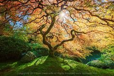 How to Photograph Trees... photography   tips   help   ideas   tuition   learn   inspiration