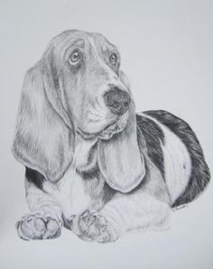 PENCIL DRAWING by myrtle