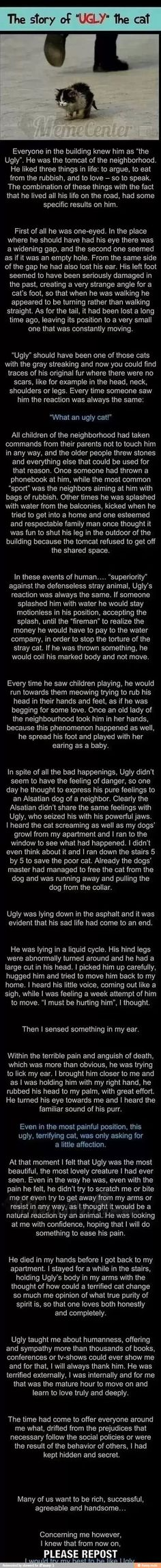 Ugly the cat, the most heartfelt thing in the world. this is the first time a post has made me cry. Seriously I cried