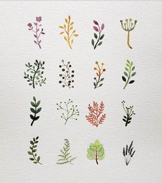Doodle Art, Aquarell Tattoos, Flower Doodles, Watercolor Illustration, Illustration Flower, Watercolor Clipart, Herbs Illustration, Pottery Painting, Ceramic Painting