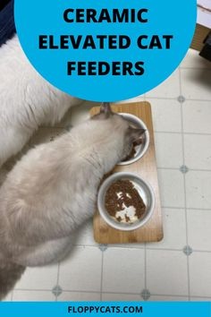 Curious about using an elevated cat feeder for your furry friends? Read this review on this ceramic elevated cat feeder so you can decide if it is the best fit for your cats. Cat Feeding Station, Cat Presents, Best Cat Litter, Cat Food Brands, Best Cat Food, Cat Feeder, Cat Products, Cat Scratcher, Cat Supplies
