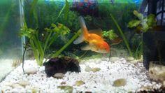 My Goldfish ...Nemo