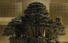 FORM – Scenery seen through BONSAI by Ryo Ohwada, Japan