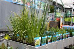 Water planten voor in de vijver