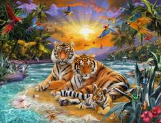 Photo Ravensburger 16624 - Family of tiger at sundowner - 2000 pieces jigsaw puzzle 1