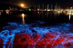 15 places to see bioluminescence [pics] - Matador Network