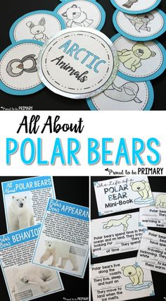All About Polar Bears has everything you need to teach polar bears. Tons of science and non-fiction … – Science Time Bear Facts For Kids, Polar Bear Facts, Polar Bears, Science Activities For Kids, Winter Activities, Artic Animals, First Grade Science, Animal Science, The Unit