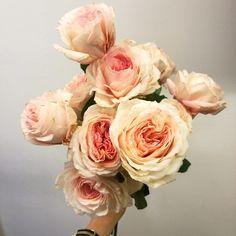 David austin roos Bloemen met liefde