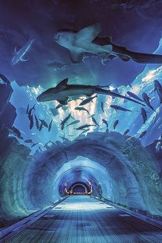 Dubai Aquarium with the world& largest aquarium. Scale feeling is different.- 世界最大の水槽を持つドバイ水族館。スケール感が違う。… Dubai Aquarium with the world& largest aquarium. Scale feeling is different. Recommended travel and sightseeing spots in Dubai. Dubai Mall, Dubai City, Dubai Trip, The Places Youll Go, Places To See, Dubai Aquarium, Dubai Travel, Dubai Vacation, Vacation Places