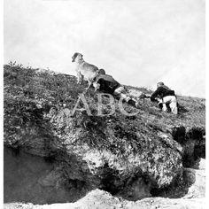 ESCENAS DE GUERRA. A LA DESCUBIERTA. UNA PAREJA DE SOLDADOS EXPLORADORES DEL REGIMIENTO DE MELILLA. FOTO: BARRIOS:24/07/1909 Descarga y compra fotografías históricas en | abcfoto.abc.es