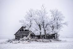 famous_amos_photography Hoar frosted trees surround this old homestead near Grande Prairie Alberta !  Read more at http://websta.me/n/famous_amos_photography#AMJJW2KWtKGBuEPa.99Amos Wiebe @famous_amos_photography Instagram photos | Websta (Webstagram)