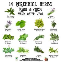 Need some ideas on where or how to plant your perennial herbs? Consider building raised beds. Many herbs are considered invasive and will spread out of your garden and into your yard.…