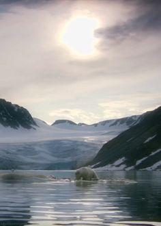 A polar bear eating from a whale carcass. (The Polar Bear Family & Me - BBC)