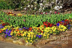 #COLORFUL #GARDEN 2 by #Kaye #Menner #Photography Quality Prints Cards Products at: http://kaye-menner.pixels.com/featured/colorful-garden-2-by-kaye-menner-kaye-menner.html