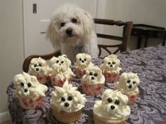 Bichon Cupcakes You my Gosh.How cute are these? I have a 15 year old Bichon and seeing these certainly made me smile! Puppy Cupcakes, Puppy Cake, Daisy Cupcakes, Fluffy Cupcakes, Bear Cupcakes, Ninja Cupcakes, Camo Cupcakes, Snicker Cupcakes, Making Cupcakes