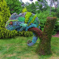 This Chameleon Topiary is very artistic!