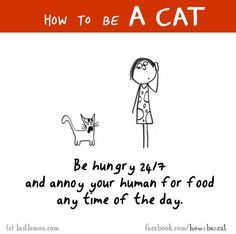 Literally my mum and my cats relationshipXD Crazy Cat Lady, Crazy Cats, I Love Cats, Cool Cats, How To Cat, Gatos Cats, Cat Comics, Cat People, Cat Quotes