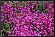Flowers photos (1,279,156 free images)