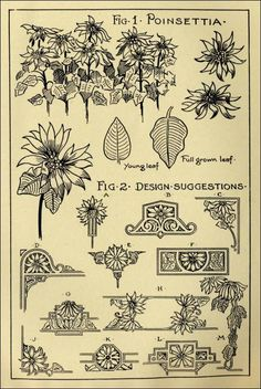"""Poinsettia Patterns in """"Monumental Drawing and Lettering: The Poinsettia in Applied Ornament"""" (1926)"""