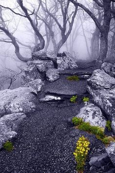 Into the Mystic, Appalachian Trail, Virginia.....mystical roots are gnarled & tangled....