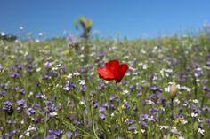 Blühwiesen auf Usedom