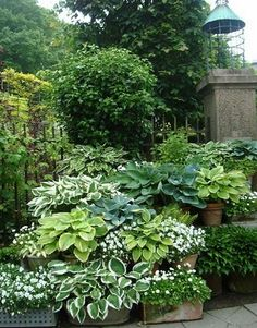 Shade Garden Ideas_2