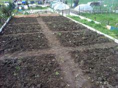 (febbraio 2016) Sembra già più un orto! Ho rotto le zolle più grosse e creato dei sentieri dividendo l'orto in 8 parti uguali. Pronto per la semina ..