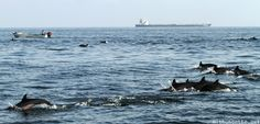 Oman 2014: Dolphin watching tour, Muscat