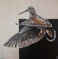 * reportage dans becasse passion n° 96 Arctic Fox, Wildlife Art, Bird Art, Blue Bird, Dolphins, Squirrel, Deer, Art Drawings, Sketches