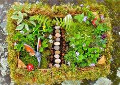 Get your kids out into the garden with this lovely activity created by our friends at @Twig and Toadstool !!!  Create Your Own Fairy Garden | CBC Parents