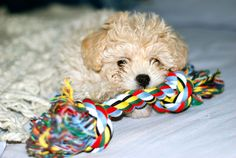 Toby the puppy playing / New toy