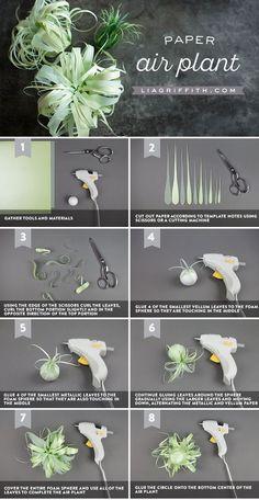 Vellum Paper Air Plants