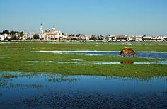 7 ways to discover Doñana National Park